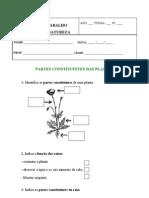 Ficha de Trabalho Plantas