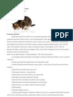 Insuficienţa renală cronică la pisici