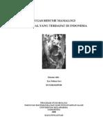 Resume Mamalogi Tentang Marsupial