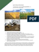 Forme-de-valorificare-energetică-a-biomasei