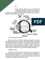 fiziologia vederii