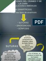 ARTICULACIONES DEL CRÁNEO Y DE LA CARA