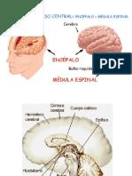 CLASE Cerebro