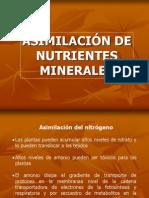 Asimilacion de Nutrientes