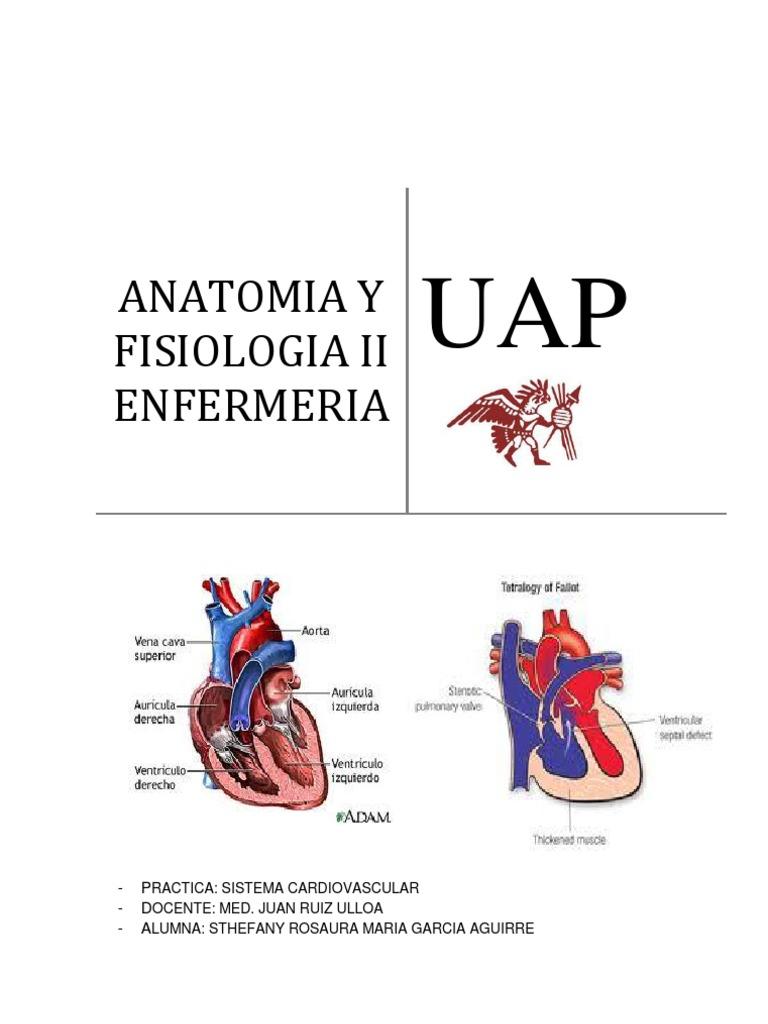 Anatomia - Informe Cardiovascular[1] Rosa