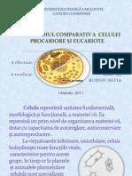 Studiul Comparativ a Celulei Procariote Si Eucariote