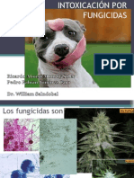 fungicidas 55 (2)
