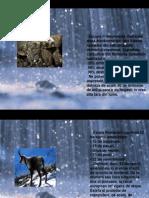 6. Conservarea Biodiversitatii in Romania Biris Patricia XB