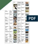 Biología (pájaros)