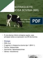 12-Rinotraqueite Infecciosa Bovina