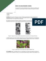 Análise visual de dados de sensoriamento remoto