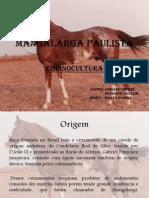 seminário mangalarga paulista