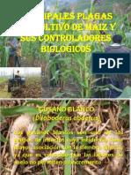 Principales Plagas Del Cultivo de Maiz y Sus