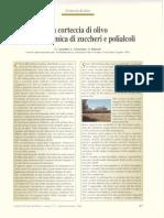 1998_La Corteccia Di Olivo Fonte Economica Di Zuccheri e Polialcoli