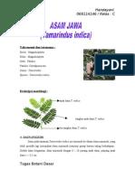 Morfologi, Anatomi, Dan Fisiologi Tamarindus Indica