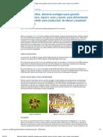 Moringa Oleífera, alimento ecológico para ganado vacuno, porcino, equino, aves y peces, para alimentación humana, también para producción de etanol y biodiesel - engormix