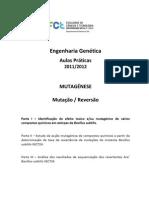 EG P1 Protocolo Mut Bsubtilis 1a Parte2012