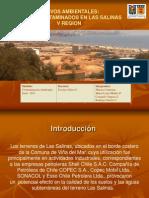 Activos Ambientales - Las Salinas  Viña del Mar