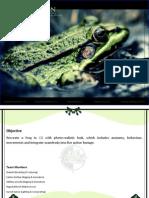 Frog Dissertation