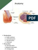 Anatomy Penis