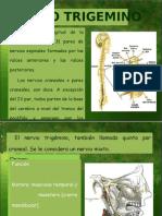 15888311-nervio-trigemino