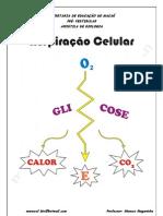 Biologia - Respiração Celular
