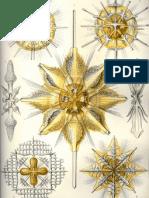 Ernst Haeckel - Artforms of Nature