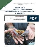 Morfometría, abundancia y distribución de Ucides occidentalis en el Sector Occidental de la Bahía de Jiquilisco