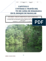 Productividad del Bosque de Manglar del Sector Occidental de la Bahía de Jiquilisco