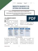 El ambiente marino y ecosistema de manglar