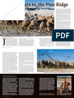 Bighorn Relocation Project - NEBRASKAland Magazine
