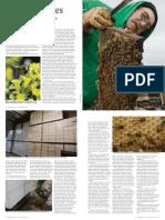 Let'sTalk Bees- NEBRASKAland Magazine
