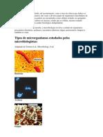 A Microbiologia - Virus, Bacterias e Fungos