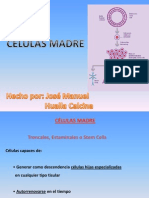 Diapositivas Celulas Madre-josma