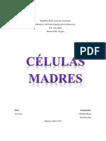 Celulas Madre