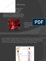 eritrocitos-110930220933-phpapp01