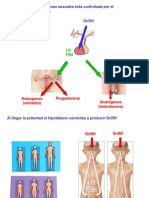 Fisiologia Reproductor
