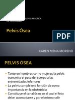 La Pelvis Osea Exponer