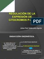 REGULACIÓN DE LA EXPRESIÓN DE CITOCROMOS P-450
