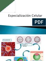 Especializacion Celular