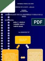 exposición metabolismo y ciclo d la urea