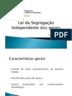 Lei da Segregação Independente dos genes
