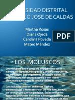exposicion moluscos