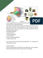 Anatomi Otak Dan Fugsi
