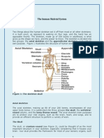 The Human Skeletal System(2)