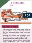 Ruptur gendang telinga