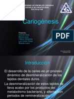 Cario Genesis