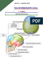 Esqueleto Axial - Artrologia