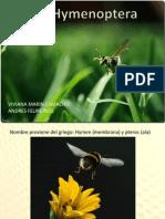 Orden Hymenoptera