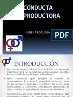 Psicopatología  Reproductora